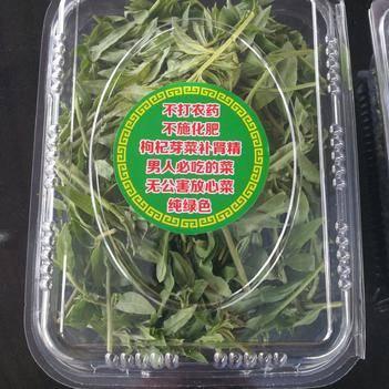 天精草:又名[枸杞芽菜]味苦,甘,肾精补,明目之功