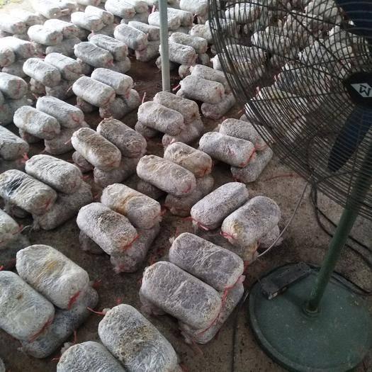 枣庄峄城区灰平菇