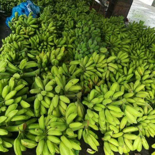 东莞市广东香蕉1号 便宜大甩卖了,有需要的请联系我,非常期待你的来电大量批发供应