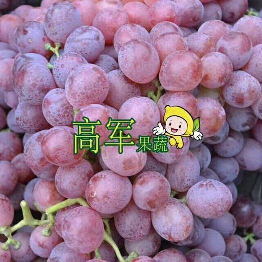 蒲城县美国红提 5%以下 1次果 1.5- 2斤