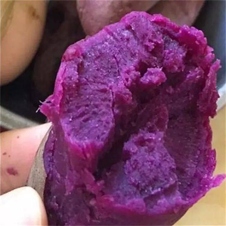 紫罗兰紫薯 3两以上