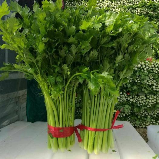 济宁金乡县法国皇后芹菜 60cm以上 大棚种植 0.5斤以下