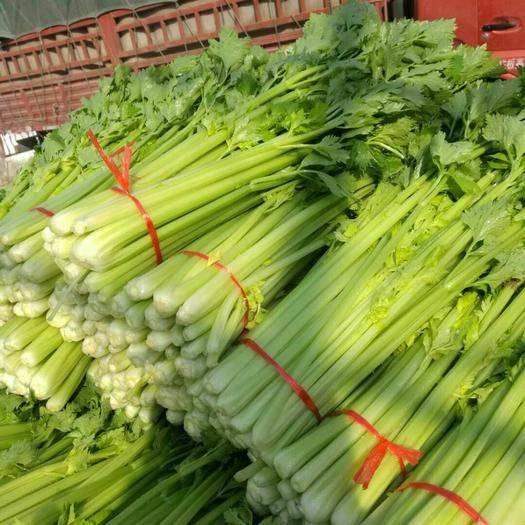 济宁金乡县美国文图拉芹菜 60cm以上 大棚种植 0.5斤以下