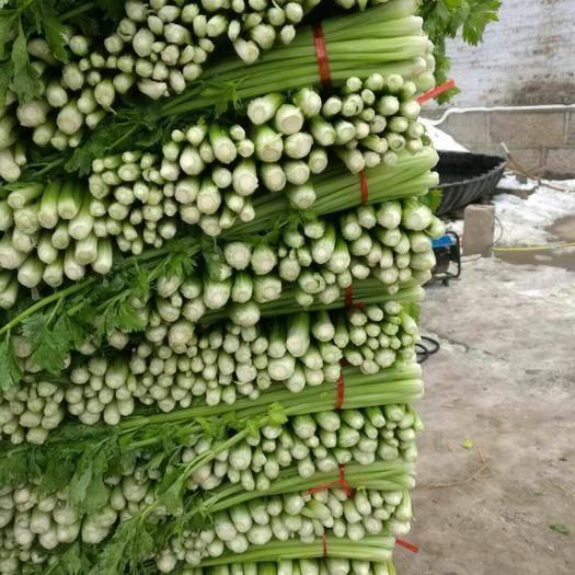 济宁金乡县西芹 60cm以上 大棚种植 0.5斤以下