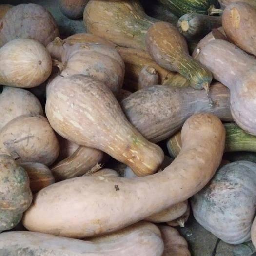 扬州美玉南瓜 2~4斤 长条形