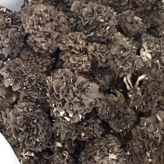 丽水庆元县栗蘑  散装 干货 人工种植 庆元灰树花 舞茸