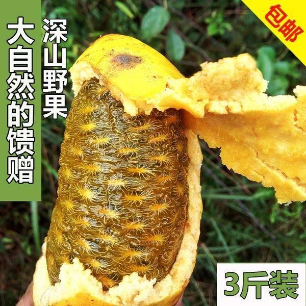 九月瓜 深山九月黄 八月瓜牛卵坨 麻藤包新鲜采摘水果童年回忆儿时味道