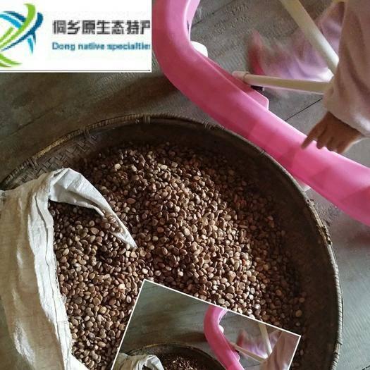 怀化通道侗族自治县黑老虎种子 提供育苗技术保证发芽率 包发芽 不发芽包赔优良品种