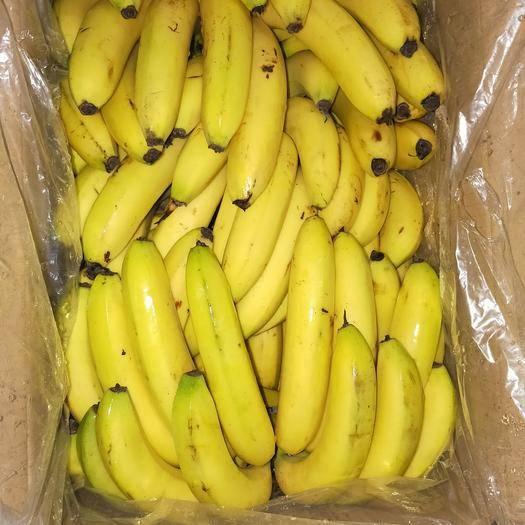 邯郸丛台区 供应云南香蕉23元每箱