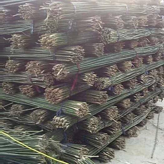 德兴市菜架竹