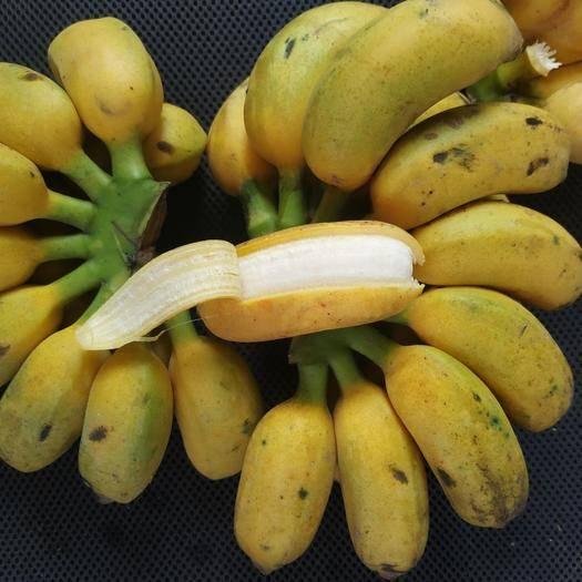 南宁小米蕉 【正常发货】广西产地直供 新鲜采摘 九斤装包邮