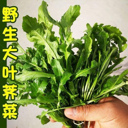 烟台长岛县艾草种子