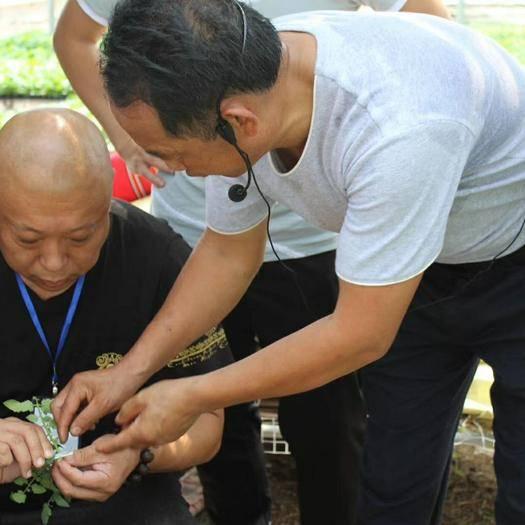 寿光市其它农机  第十四届无土栽培培训