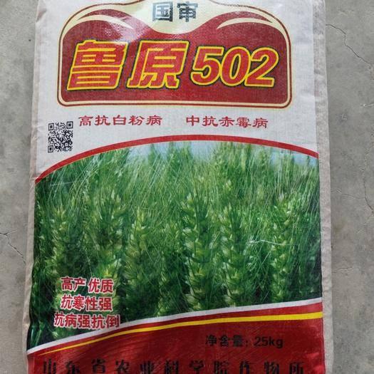 濟南歷城區小麥種子