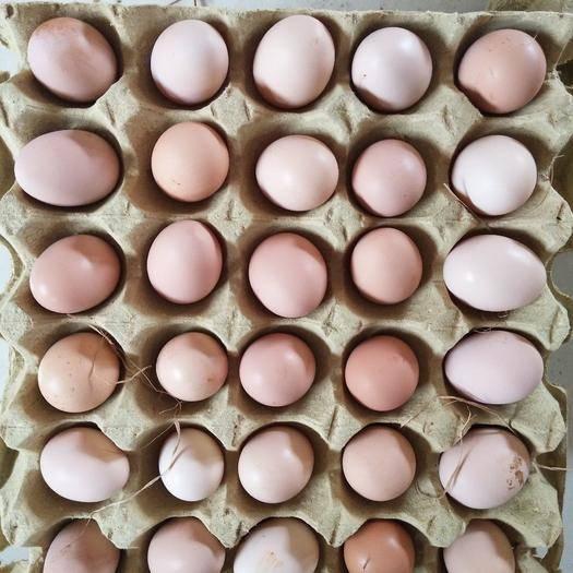 銅陵郊區 散養土雞蛋一斤15個左右