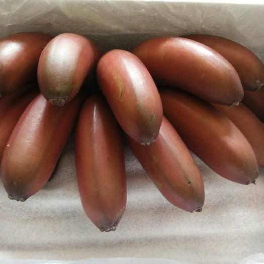 南宁红蕉 八成熟