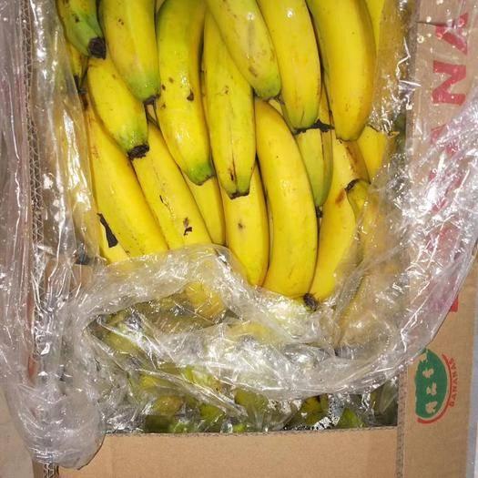 丰县菲律宾香蕉 七成熟 50 - 60斤