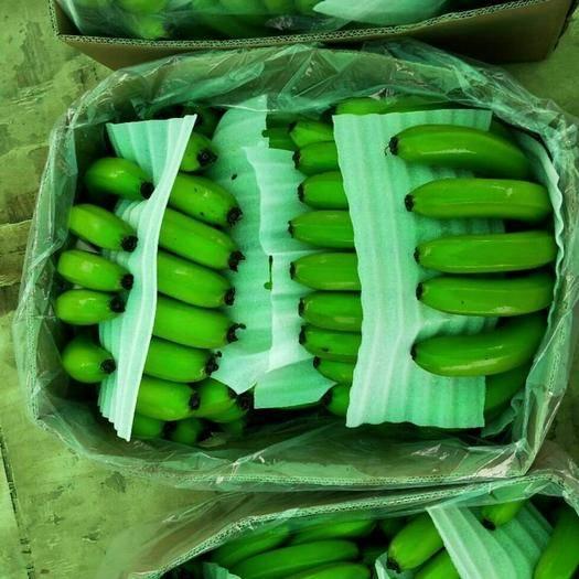 红河河口瑶族自治县河口香蕉 八成熟 40斤以下