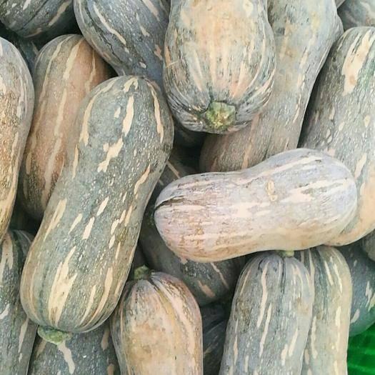 南宁西乡塘区奶油南瓜 2~4斤 其他