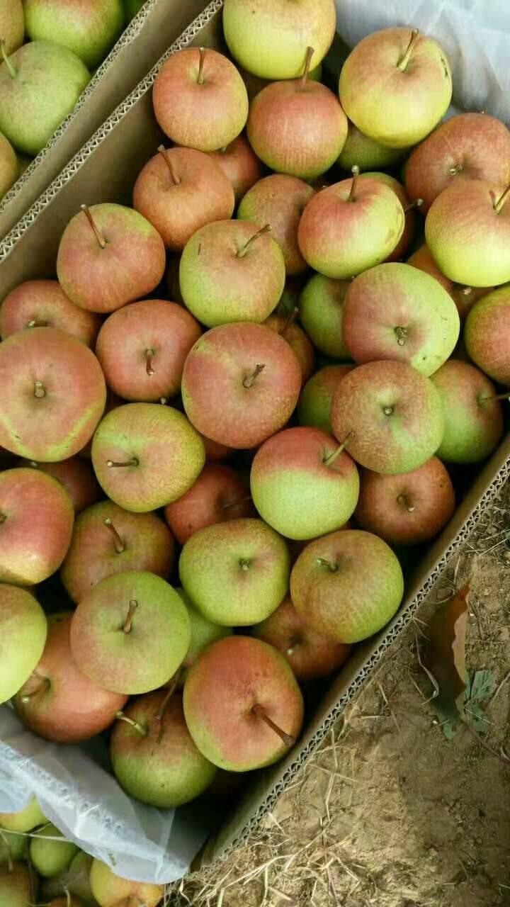 蘋果梨 150-200g 65mm以上