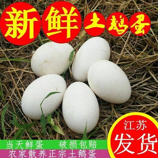 沭陽縣 初生鵝蛋產地直銷新鮮鵝蛋大量供應優質新鮮鵝蛋歡迎大家實地考察