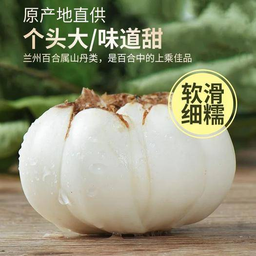 定西临洮县百合种子