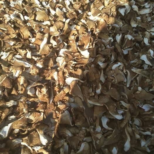 白山抚松县元蘑 人工种植 干货