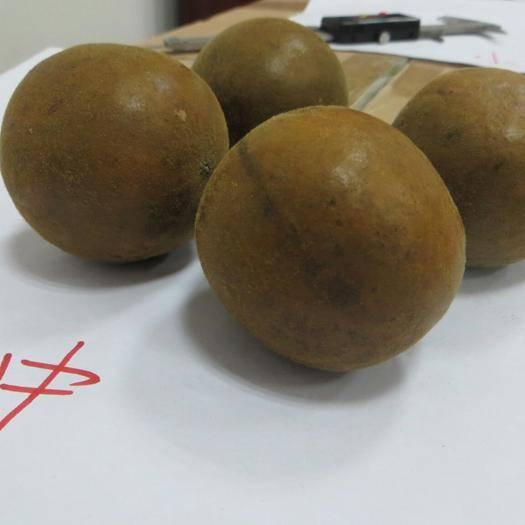 永??h 永福羅漢果    小果   0.85元/個  中國羅漢果之鄉
