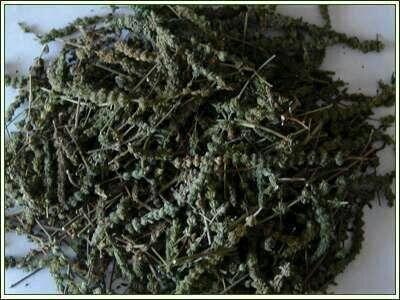 大同荊芥 凈籽 一件代發 推薦