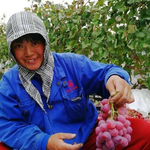 龙口市美国红提 5%以下 1次果 1.5- 2斤