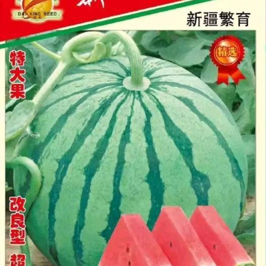 周口扶沟县早佳8424西瓜种子 新一代大果8424~早熟,圆型,红瓤,亩产5000公斤,