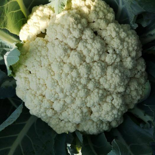 漳浦县有机花菜 松散 2~3斤 乳白色