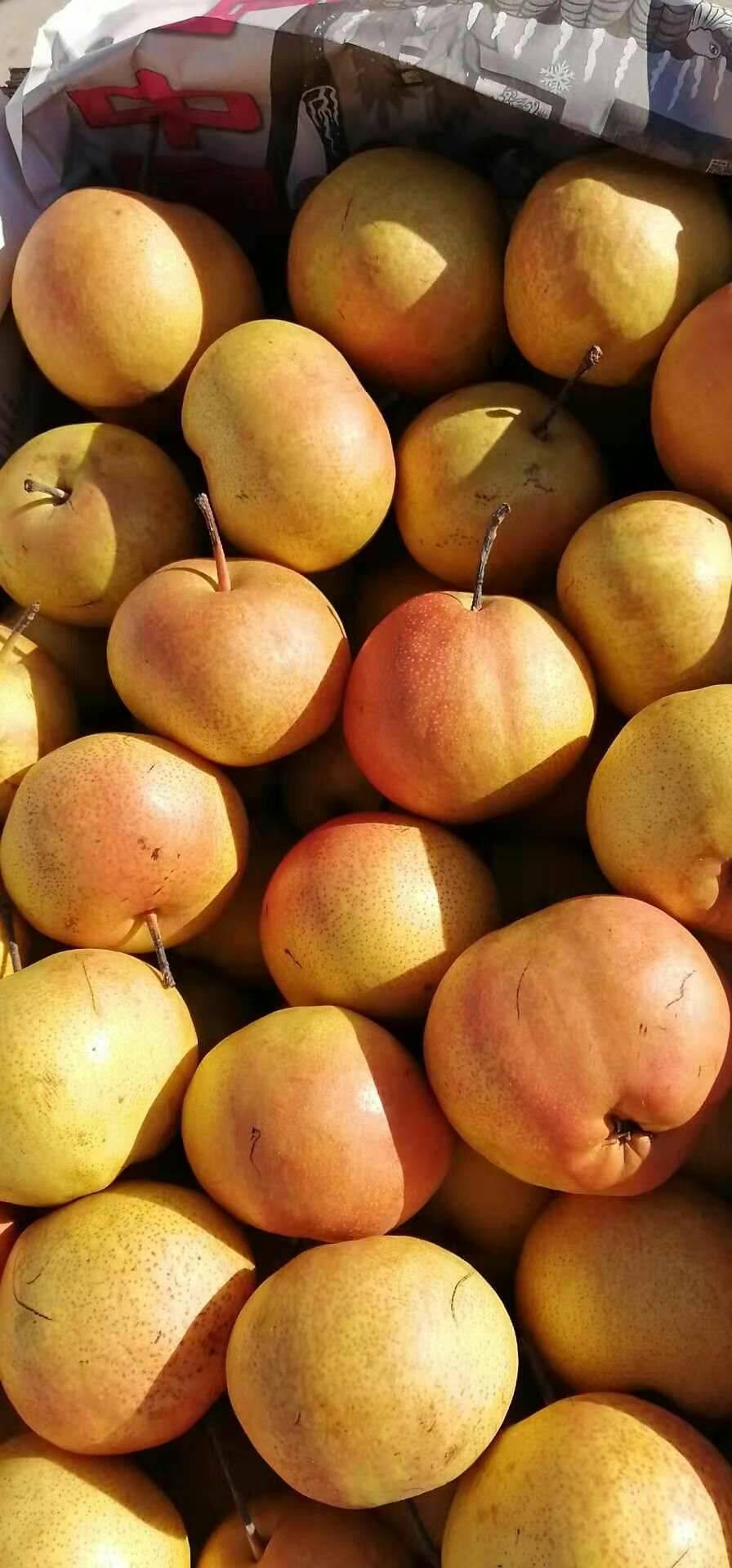 蘋果梨 200-250g 65mm以上