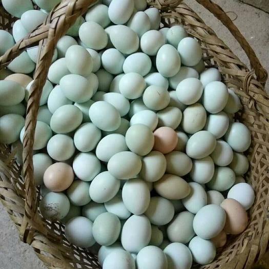 长沙雨花区 绿壳土鸡蛋,品质保证,新鲜安全,一手货源寻找长期合作商