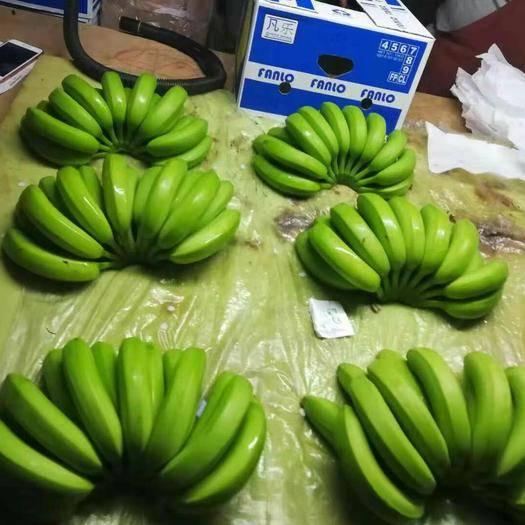 大连菲律宾香蕉 七成熟