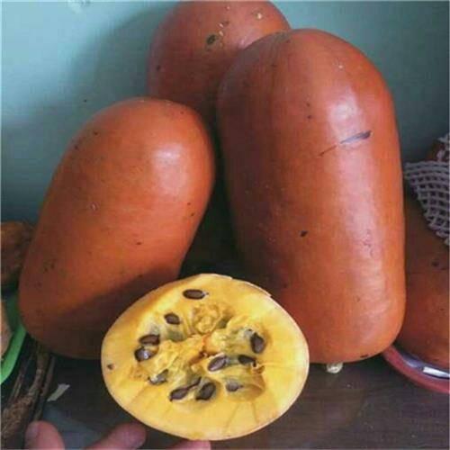 济南历城区 香如蜜种子红香蜜优质火腿香瓜种水如蜜种口感甜发芽高香甜瓜菜籽