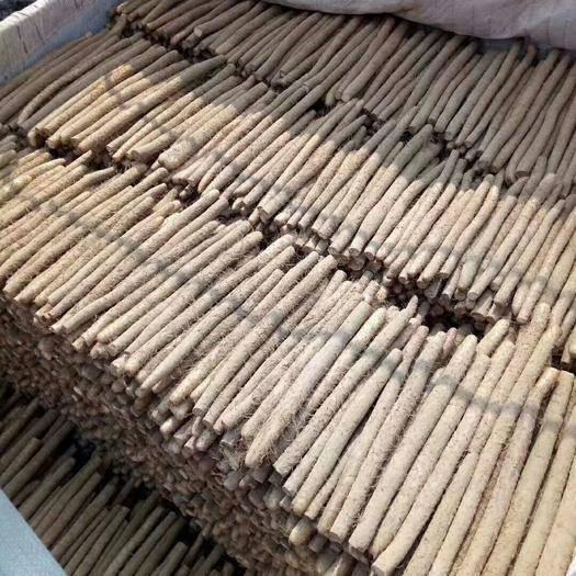 菏澤牡丹區白玉山藥 40~50cm