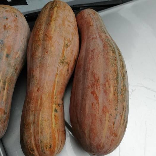 咸丰县富硒南瓜 6~10斤 长条形