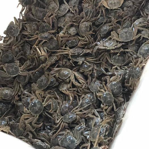 南京 固城湖大閘蟹0.3-0.8錢老頭蟹公蟹早熟蟹二零蟹一元蟹香辣