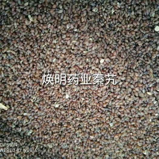大同平城區秦艽 種子 一件代發  推薦