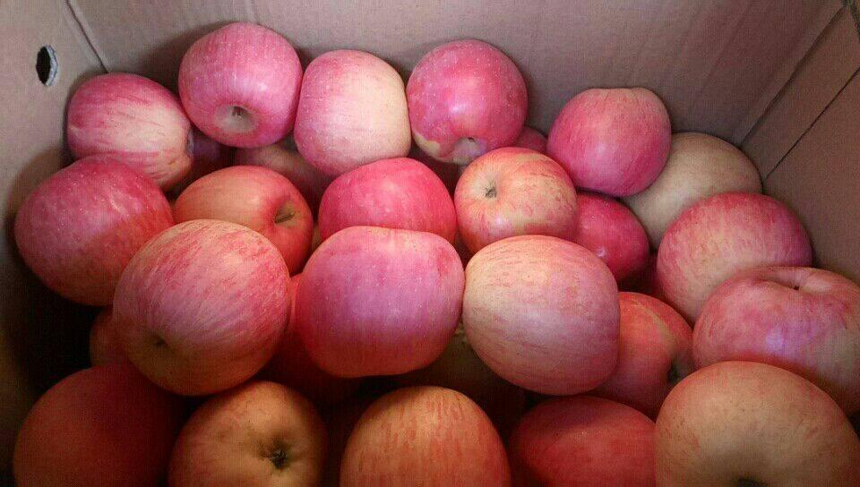 红富士苹果 光果 条红 75mm以下