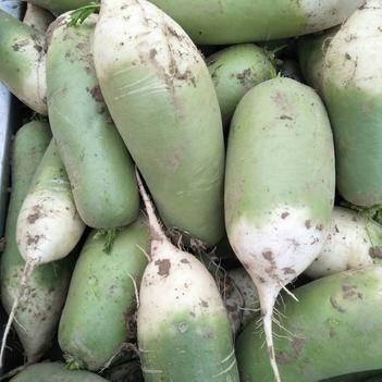 青皮绿萝卜 1~1.5斤