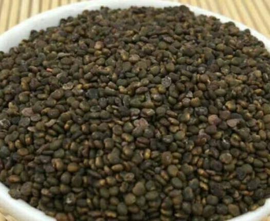 岷县黄芪种子 黄芪新种子出售