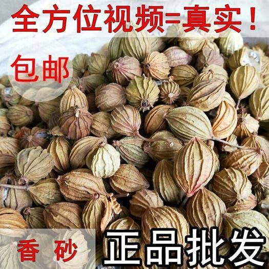 滄州任丘市 香砂          十元一斤五斤包郵