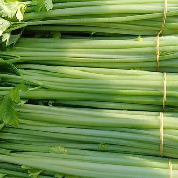 香芹 40~45cm 0.5斤以下 大棚种植