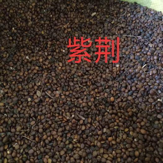 菏泽牡丹区紫荆花种子