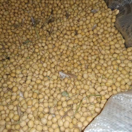 泰安肥城市皖豆35 生大豆 2等品