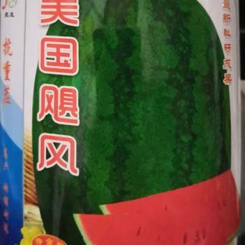 懒汉西瓜种子 美国飓风 抗重茬产量高 耐运输