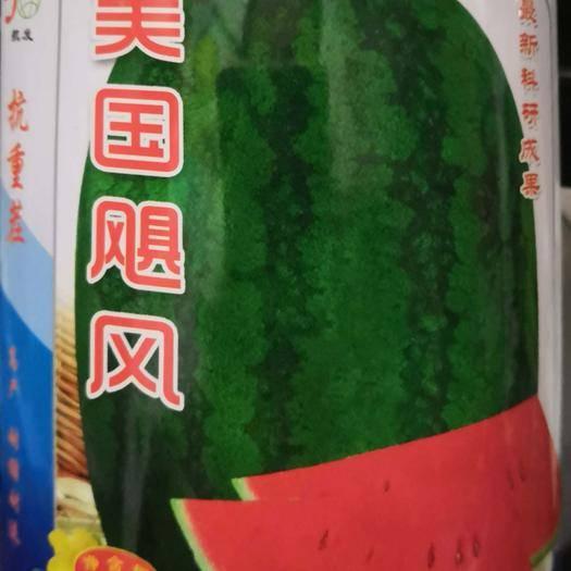 南阳卧龙区懒汉西瓜种子 美国飓风 抗重茬产量高 耐运输