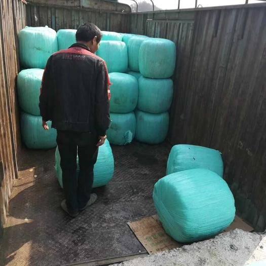 赣州南康区青贮类饲料 大量供应皇竹草,玉米杆皇竹草象草青贮料青储料